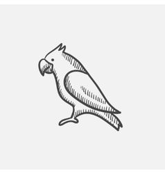 Parrot sketch icon vector image vector image