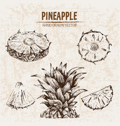 Digital detailed line art pineapple vector