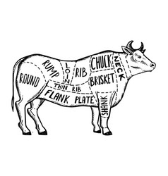 meat diagram cow engraving vector image