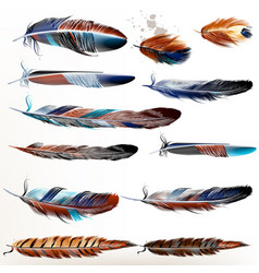set of realistic colorful feathers vector image