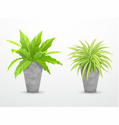 tropical tree in cement pots collections vector image