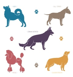 Set of different dog breeds silhouettes vector image vector image