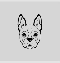 animal bulldog cute puppy head front view vector image