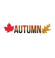autumn word art vector image