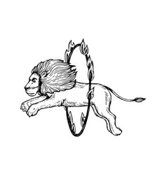 circus lion jumps into fire ring engraving vector image