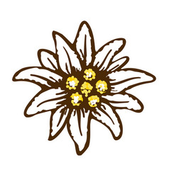 edelweiss flower symbol alpinism alps germany logo vector image