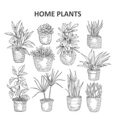 Home plant 03 vector