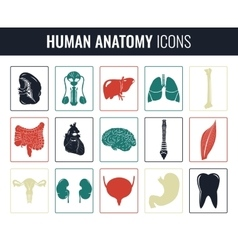 Human internal organs Anatomy set icons vector image