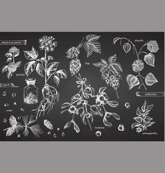Set vintage hand drawn sketch medicine herbs vector