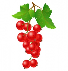 currant red on bench vector image vector image