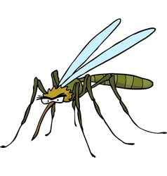 mosquito doodle vector image
