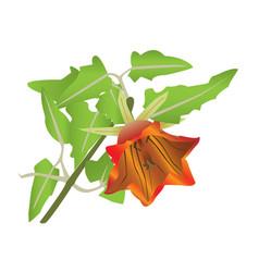 Blooming orange flower vector