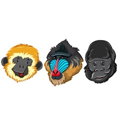 Different type of monkey vector image