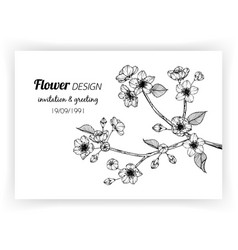 greeting card with sakura flower and leaf hand vector image