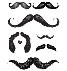 hand drawn mustache set vector image
