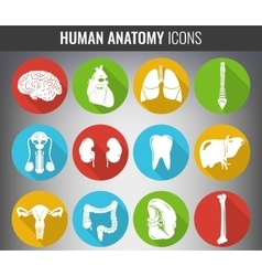 Human internal organs Anatomy set icons vector