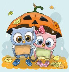 halloween card two cute cartoon owls vector image