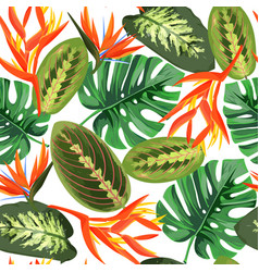 Heliconia and strelizia flowers vector