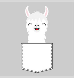 llama alpaca face head in pocket cute cartoon vector image