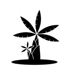banana tree icon vector image