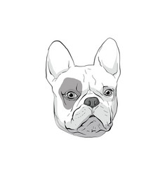 dog-boxer vector image
