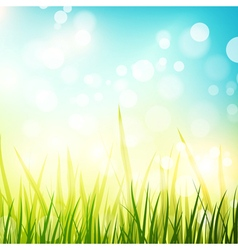 Natural spring or summer sunny background vector