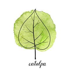 leaf catalpa tree vector image