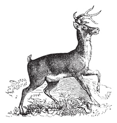 Virginia deer vintage engraving vector