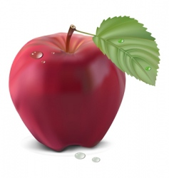 apple and leaf vector image vector image
