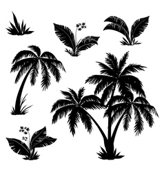 Palm trees flowers and grass silhouettes vector