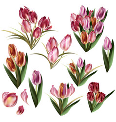 collection realistic pastel flowers vector image