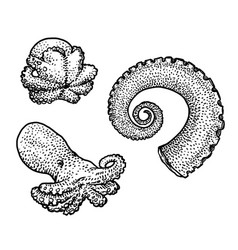 Octopus and tentacle drawing engrav vector