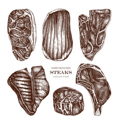 Raw meat top view sketches collection f vector