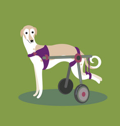 Set of handicapped disabled dogs vector