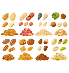 Cartoon nuts almond peanut cashew hazelnut vector