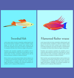 filamented flasher wrasse and swordtail fish vector image