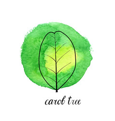 Leaf of carob tree vector