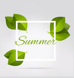 fresh green leaves in a square summer vector image vector image