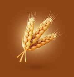 realistic ear of wheat vector image