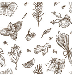 Herbs sketch pattern background seamless vector