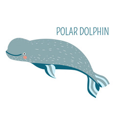 polar dolphin cartoon childish charater for book vector image