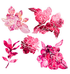 red and pink textured magnolia and jasmine flowers vector image