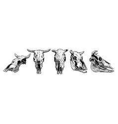 Cow and bull skull set vector