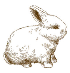 engraving of fluffy bunny vector image vector image