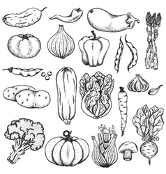 big collection vegetables vector image