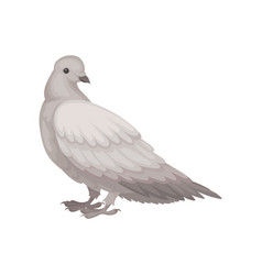Flat icon of gray dove side view bird vector