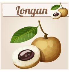 Longan fruit Cartoon icon vector image