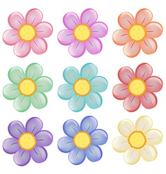Nine colorful flowers vector image
