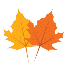 yellow and orange maple leaves on white background vector image