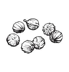 Coriander seeds sketch style vector